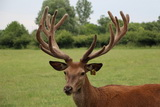 2nd head at the Deer Trophy Farm