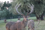 3rd head at the Deer Trophy Farm